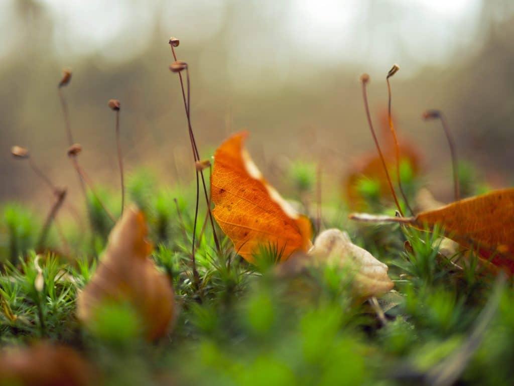 Relax More - Wiebelen op het mos
