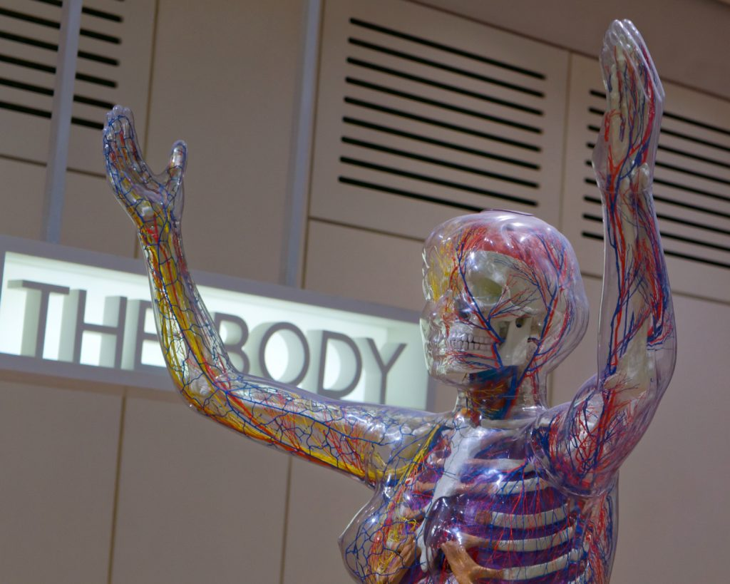 Relax More - Anatomisch bewijs voor het bestaan van meridianen
