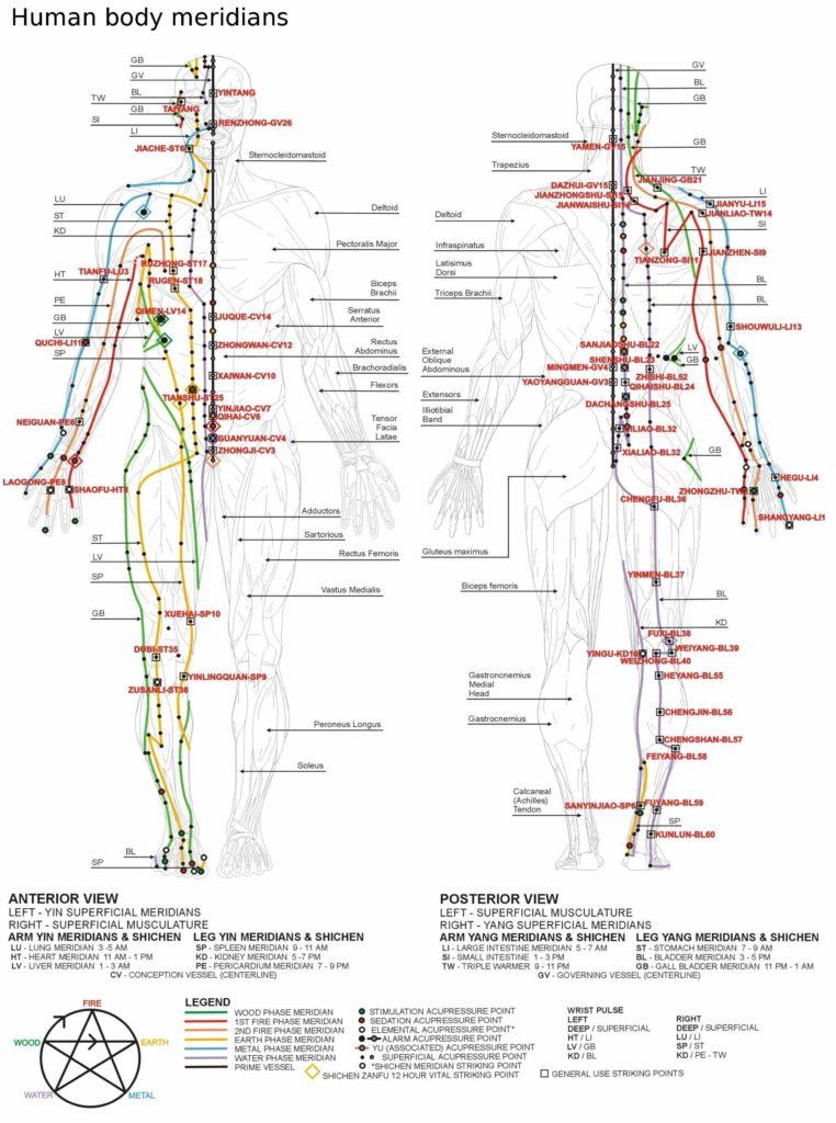 Relax More - Wetenschappelijk anatomisch bewijs voor het bestaan van meridianen 2