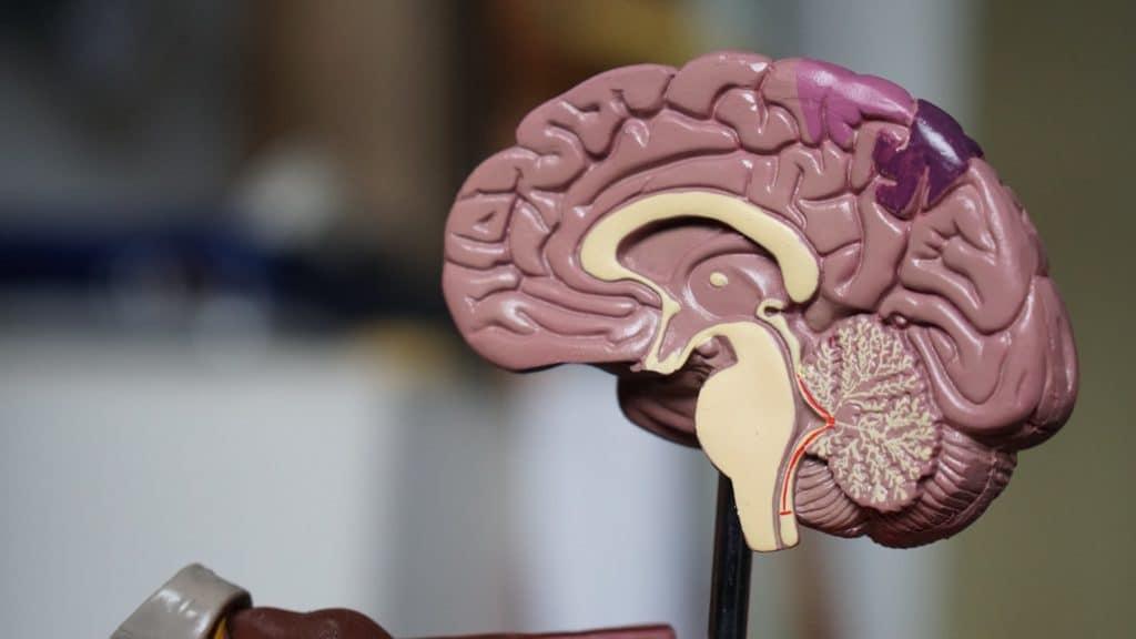 Relax More - Bewezen: mindfulness verandert je brein in 8 weken